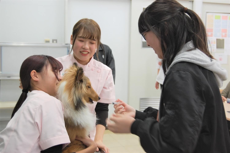 動物看護師を目指す学生から話を聞く高校生。動物の体について体験授業を聴くチャンスも。