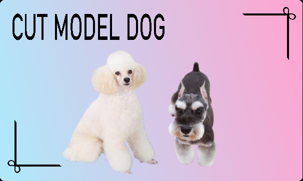 カットモデル犬