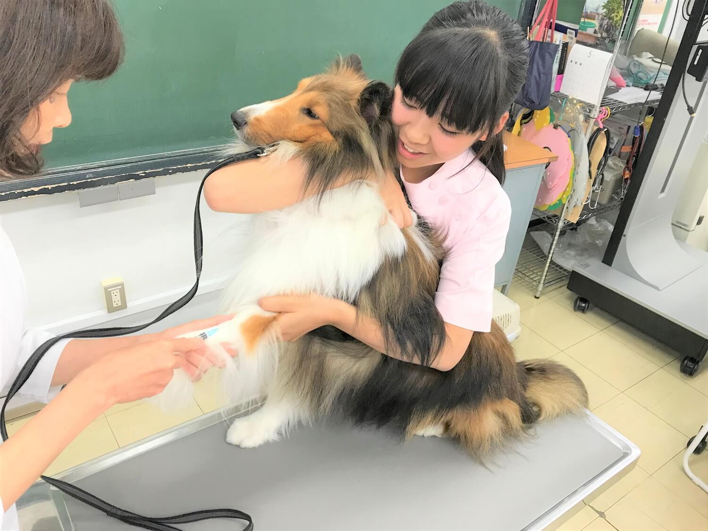 動物看護専攻