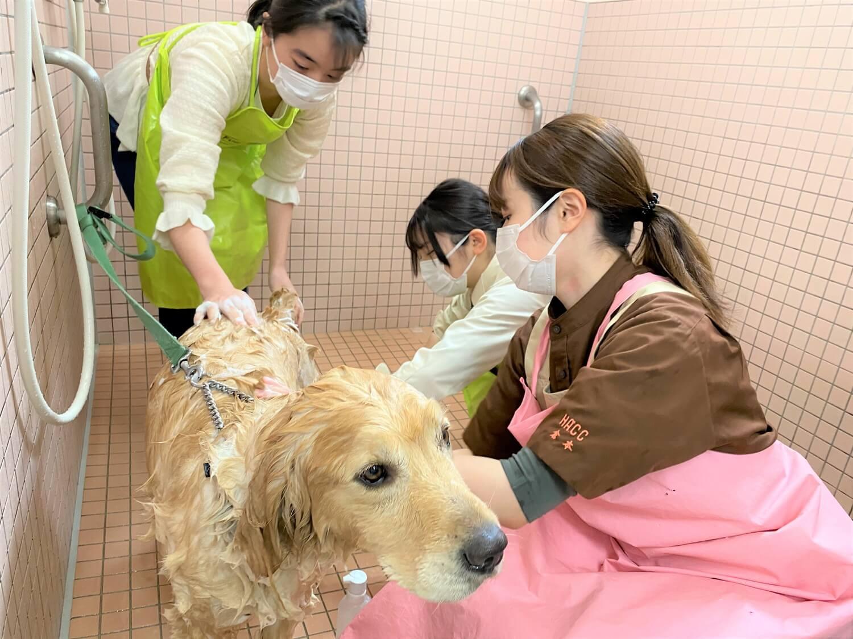 飼育犬を使ってシャンプー体験する様子。トリマーの仕事を実際に体験できます。