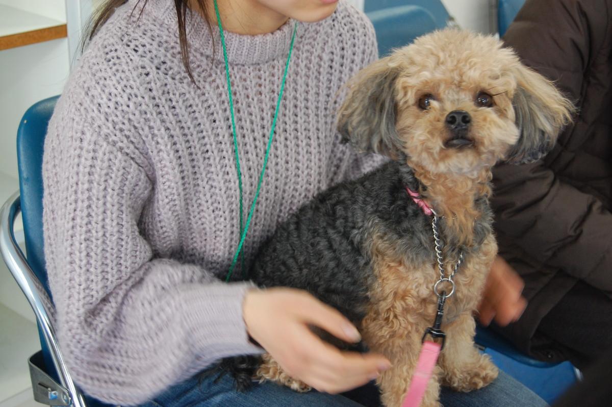 セラピー犬を膝に抱っこしている様子。動物のあたたかみや可愛らしさを、利用者目線で体験することができます。